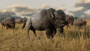 Buffalo - Ryan Meitzler